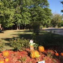 Fall flower beds at Olney City Park.